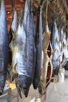 塩引き鮭 10467001007| 写真素材・ストックフォト・画像・イラスト素材|アマナイメージズ