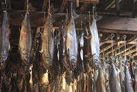 塩引き鮭 10467001008| 写真素材・ストックフォト・画像・イラスト素材|アマナイメージズ