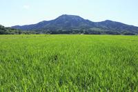 角田山と越後平野の田園
