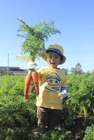 人参を収穫する男の子 10467001400| 写真素材・ストックフォト・画像・イラスト素材|アマナイメージズ