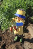 人参を収穫する男の子
