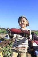 サツマイモ堀りする男の子