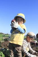 サツマイモ堀りする男の子 10467001426| 写真素材・ストックフォト・画像・イラスト素材|アマナイメージズ