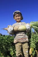 大根を収穫する男の子 10467001430| 写真素材・ストックフォト・画像・イラスト素材|アマナイメージズ