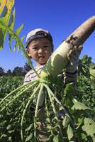大根を収穫する男の子 10467001432| 写真素材・ストックフォト・画像・イラスト素材|アマナイメージズ