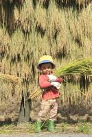 稲を抱えた男の子 10467001496| 写真素材・ストックフォト・画像・イラスト素材|アマナイメージズ