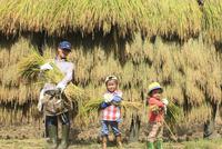 稲を収穫する親子