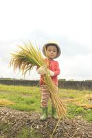 稲を抱えた男の子