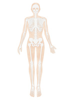 人体の骨格イラスト・肌色