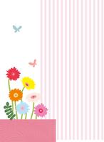 ガーベラと蝶とストライプ