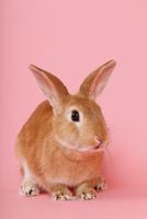 ウサギのポートレイト 10487001853| 写真素材・ストックフォト・画像・イラスト素材|アマナイメージズ