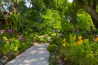 緑豊かなシンガポール植物園 10487001898| 写真素材・ストックフォト・画像・イラスト素材|アマナイメージズ