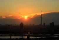 船堀より望む東京スカイツリー方面の夕景