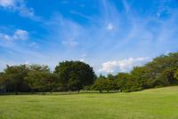 光が丘公園の緑