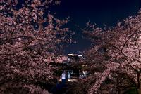 皇居外苑・桜田壕から八重洲ビル群と桜の夜景