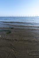 ふなばし三番瀬海浜公園・三番瀬の砂浜5