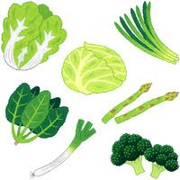 野菜/葉茎菜類 10514000068| 写真素材・ストックフォト・画像・イラスト素材|アマナイメージズ