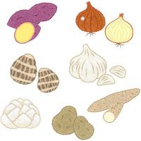 野菜/土物類 10514000071| 写真素材・ストックフォト・画像・イラスト素材|アマナイメージズ