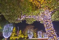 東京ミッドタウンの夜景 10517000601| 写真素材・ストックフォト・画像・イラスト素材|アマナイメージズ