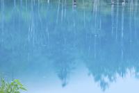青い池に映る森林