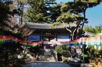 梵魚寺 釜山 10530000008| 写真素材・ストックフォト・画像・イラスト素材|アマナイメージズ