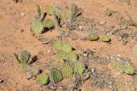 アリゾナ州のサボテン 10530007682| 写真素材・ストックフォト・画像・イラスト素材|アマナイメージズ