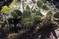 アリゾナ州のサボテン 10530007686  写真素材・ストックフォト・画像・イラスト素材 アマナイメージズ