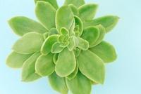多肉植物 10531000029  写真素材・ストックフォト・画像・イラスト素材 アマナイメージズ
