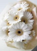 複数の白いガーベラの花