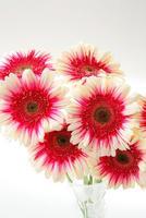 花器にさしたガーベラの花