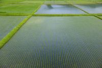 水田のパターン 10548004165| 写真素材・ストックフォト・画像・イラスト素材|アマナイメージズ