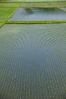 水田のパターン 10548004166| 写真素材・ストックフォト・画像・イラスト素材|アマナイメージズ