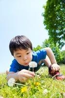 公園でタンポポを吹こうとする男の子