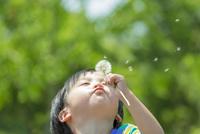 公園でタンポポの綿毛を吹く男の子