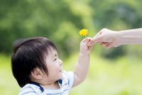 公園で母親からタンポポをもらう男の子