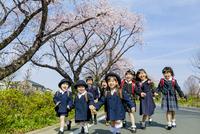 桜の咲く道を歩く新一年生と新入園児