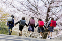 桜の咲く公園を走る新一年生の後ろ姿