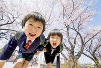 桜の咲く遊歩道で遊ぶ新一年生