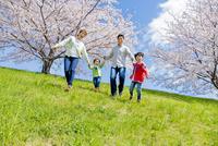 桜の咲く土手を下る4人家族
