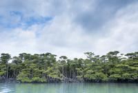 西表島仲間川のマングローブ林 10573002712| 写真素材・ストックフォト・画像・イラスト素材|アマナイメージズ