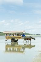 西表島と由布島間を渡る水牛車