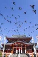 たくさんの鳩が飛ぶ青空と大須観音観音堂