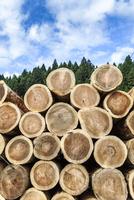 森林を背景にスギとヒノキの丸太が積み上げられた風景