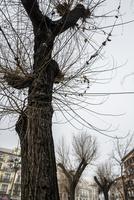 細かい枝が重なり合う冬の樹木を見る風景 10573005626| 写真素材・ストックフォト・画像・イラスト素材|アマナイメージズ