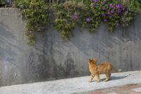 塀の植物を見上げるチャトラ 10583004514  写真素材・ストックフォト・画像・イラスト素材 アマナイメージズ