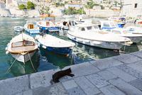 ドブロブニク、旧港と黒猫