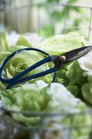 緑や白のバラの中に置かれた 青い花はさみ