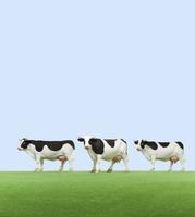 牧場の牛 ミニチュア 10610001491| 写真素材・ストックフォト・画像・イラスト素材|アマナイメージズ