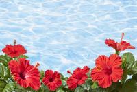 ハイビスカスと水の波紋