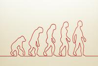 一本の紐でつくった類人猿の進化 10610003021| 写真素材・ストックフォト・画像・イラスト素材|アマナイメージズ